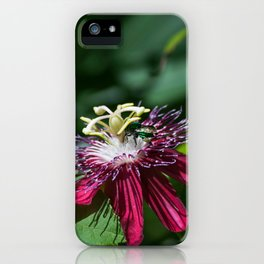 A Surprise Visitor iPhone Case