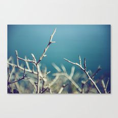 Blue Winter Thorns Canvas Print