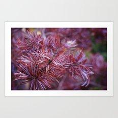 purple pine Art Print