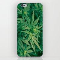 marijuana iPhone & iPod Skins featuring Marijuana Plants  by Limitless Design