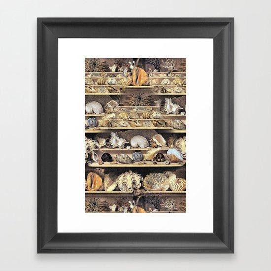 Vintage Shell Collection Framed Art Print