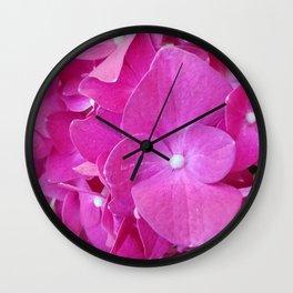 Fuchsia pink hydrangea flowers Wall Clock