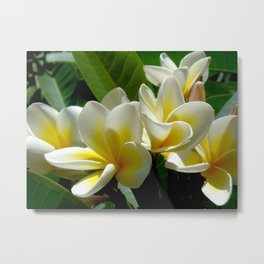 White summer Flowers by Lika Ramati Metal Print