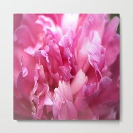 Pink Flower Petals Close-up #decor #society6 #homedecor #buyart Metal Print