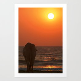 Cow Watching the Sunset Arambol Art Print