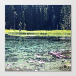 Pink and Teal Swamp Canvas Print