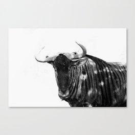 Mr Wildebeest Canvas Print