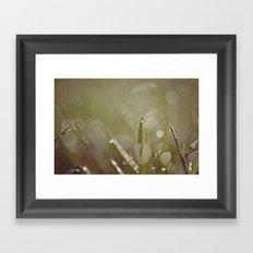 Dew Drop Framed Art Print
