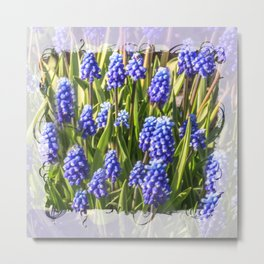Grape hyacinths muscari Metal Print