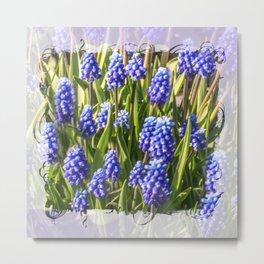 Grape hyacinths muscari Metal Print