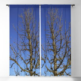 Bur Oak, Quercus macrocarpa, Wisconsin tree, prairie, savanna Blackout Curtain