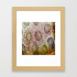 Indonesian Coral Framed Art Print