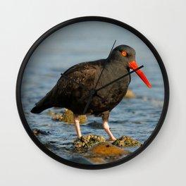 Black Oystercatcher at the Beach Wall Clock