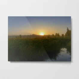 Bright sun over tall grass of a forest swamp Metal Print