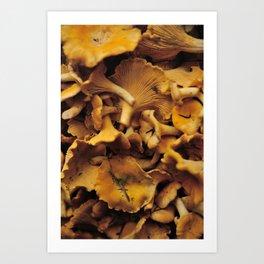 Chantarelle mushrooms. Art Print