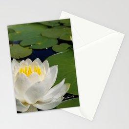 Lilly Stationery Cards
