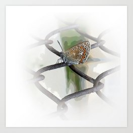 butterfly on fence Art Print