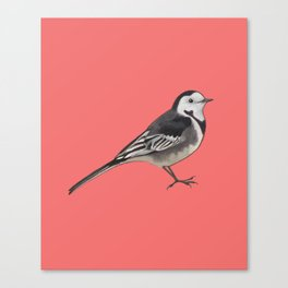 Peter the Pied Wagtail Canvas Print