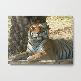 Something on your nose... Metal Print