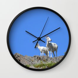 Ewe and Lamb Dall Sheep Wall Clock