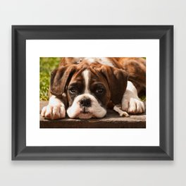 Alfie I Framed Art Print