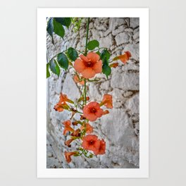 Trumpet Flowers, Greece Art Print