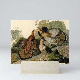 Ruffed Grouse (Bonasa umbellus) Mini Art Print