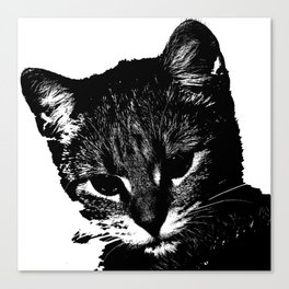 An injured cat walks your way, what do you do? Canvas Print