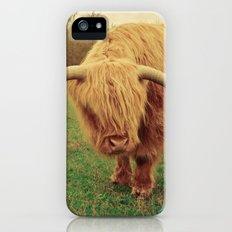 Scottish Highland Steer - regular version Slim Case iPhone (5, 5s)