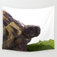 tortoise Wall Tapestries featuring Greek land tortoise II by AvHeertum