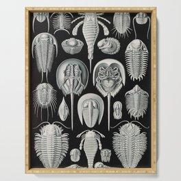 Ernst Haeckel Horseshoe Crab Vintage Illustration Serving Tray