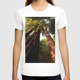 Redwood Tree Tops T-shirt
