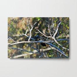 Anhinga on a Branch Metal Print