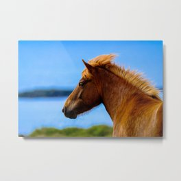 horse by Francesco Ungaro Metal Print