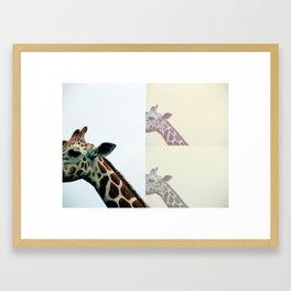 giraffe. Framed Art Print