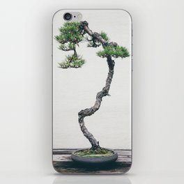 Pine Bonsai iPhone Skin