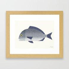 Sea bream Framed Art Print