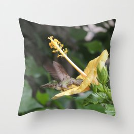 Hibiscus and Visitor Throw Pillow
