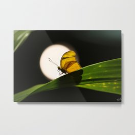 Butterfly and the Moon Metal Print