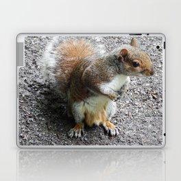 Grey Squirrel Laptop & iPad Skin