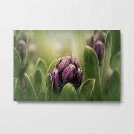 Hyacinths in Dew Metal Print