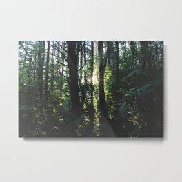 Forest Trail XXII Metal Print