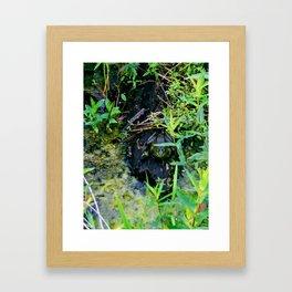 Relax frog Framed Art Print