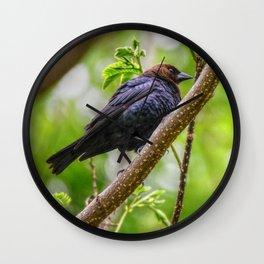 Brown Headed Cowbird Wall Clock