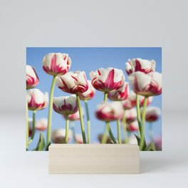 Tulips in Bloom Mini Art Print