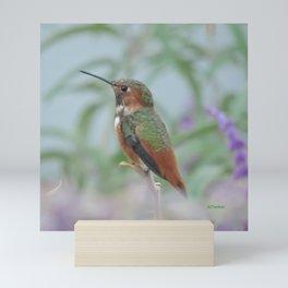 Allen's Hummingbird Sentinel Mini Art Print