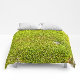 Moss, Nature Trails for Life Comforters