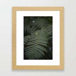 Plant -Fern Framed Art Print