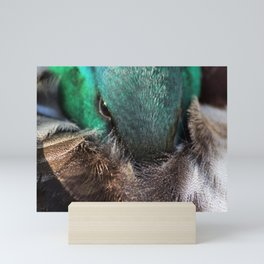 Sleepy mallard duck close-up 1 Mini Art Print