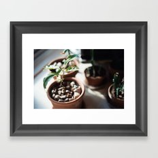 planter Framed Art Print